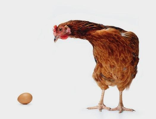 Ce a fost primul, oul sau gaina? S-a descoperit raspunsul!