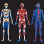 15 lucruri despre corpul uman care te vor uimi