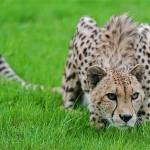 Cel mai rapid animal de pe Pamant