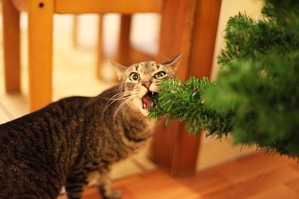 Istoria pisicii domestice