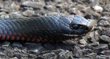 O femeie din Somalia a născut un șarpe viu