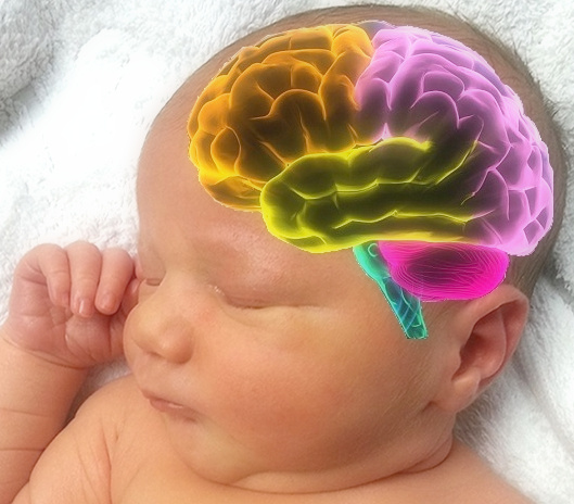 Sărăcia influențează dezvoltarea creierului încă de la naștere