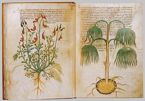Un remediu din usturoi și ceapă vechi de 1000 de ani omoară bacteriile rezistente la antibiotice