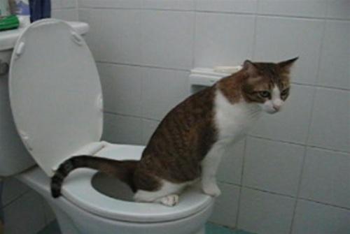 De ce tot mai mulți bărbați se așază pe toaletă când urinează