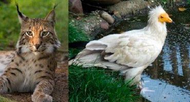 Cele mai rare animale din România