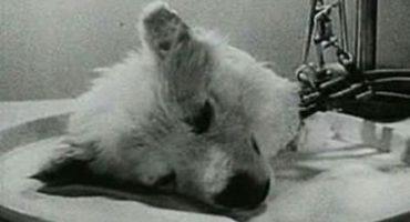 Savanții rusi au reușit să mențină în viață un cap de câine tăiat