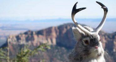Cele mai ciudate animale din lume