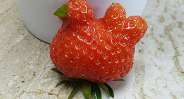 Amuzant! Fructe și legume cu forme ciudate – Galerie Foto