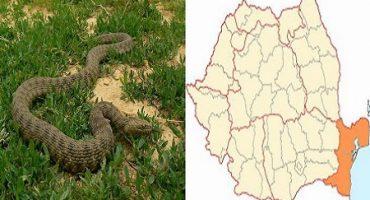 Cel mai înfricoșător șarpe din România