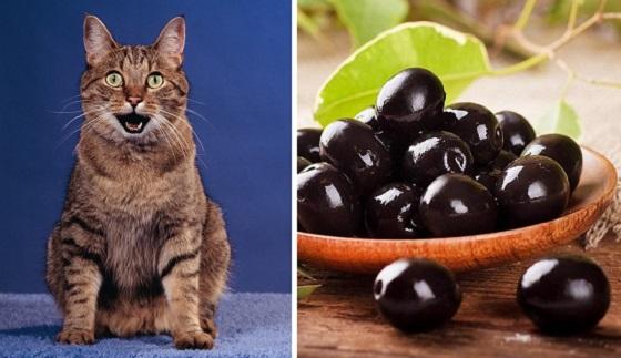 Ce se întamplă când o pisică mănâncă masline