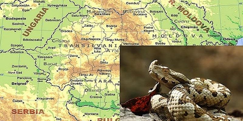 Zonele Din Romania In Care Trăiesc Vipere