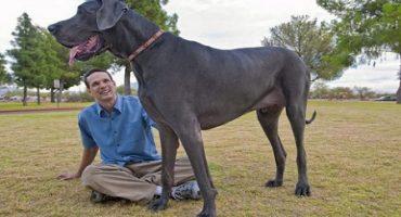20 de curiozităti pe care nu le știai despre câini