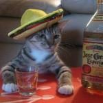 22 de curiozitati pe care nu le stiai despre alcool