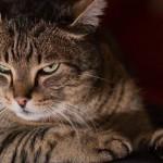 20 de lucruri incredibile pe care nu le știai despre pisici