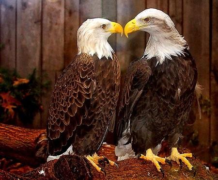 vultur-love