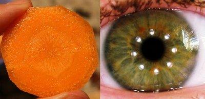 morcoviochi1