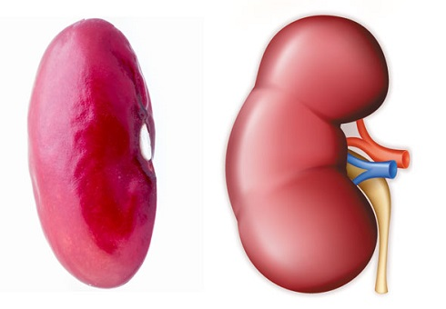 rinichi-fasole
