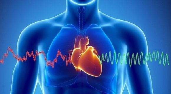20 de curiozități despre inimă