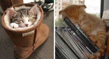20 de imagini care îți arată că pisicile pot dormi oriunde