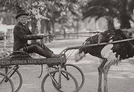 În California, erau la modă plimbările cu struți în jurul anului 1900