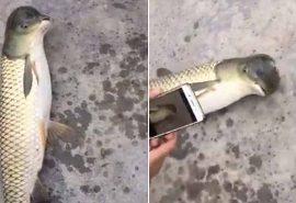 VIDEO. În China a fost prins un pește cu cap de pasăre