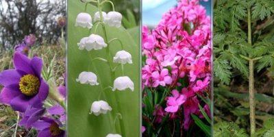 Cele mai otrăvitoare plante care cresc în România