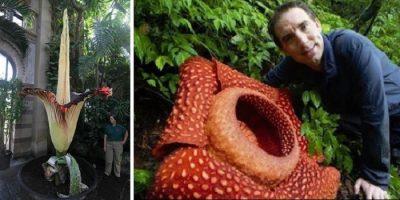 TOP 10 Cele mai mari flori din lume