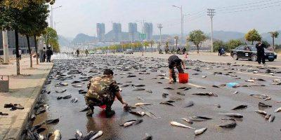 Orașul în care plouă cu pește în fiecare an