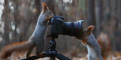 20 de curiozități fascinante despre veverițe