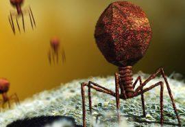 Care este diferența dintre un virus și o bacterie?