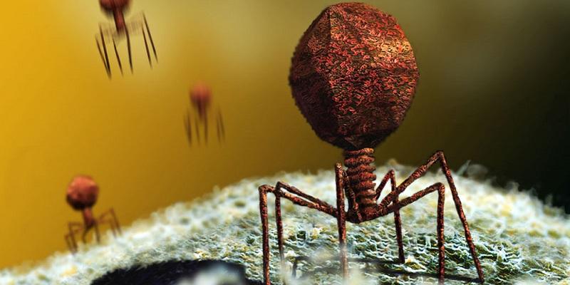 virusi si bacterii)