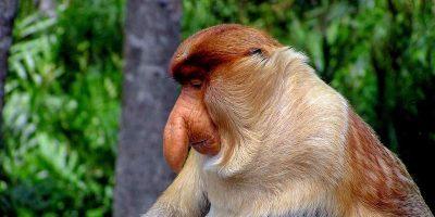 15 rase de maimuțe mai puțin cunoscute