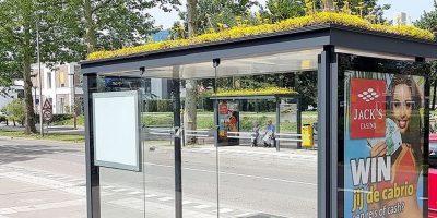 În Olanda sunt montate acoperișuri verzi pentru a atrage albinele și a purifica aerul