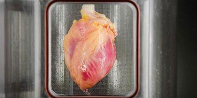 Oamenii de știință au creat în laborator o inimă folosind celule stem