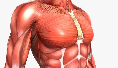 toți mușchii corpului și articulațiilor doare)