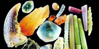 Cum arată nisipul mărit de 300 de ori la microscop