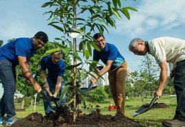 Elevii și studenții din Filipine trebuie să planteze 10 copaci pentru a-și lua diploma