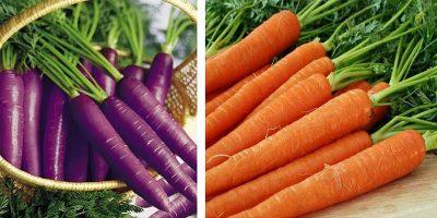 De ce au fost modificați genetic morcovii de către olandezi din mov în portocaliu?