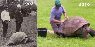20 de curiozități despre țestoase