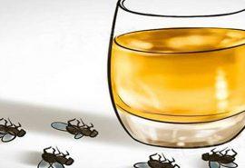 Cum scapi de muștele din casă în mod natural