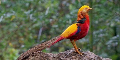10 lucruri interesante despre păsări