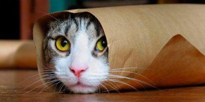 Ce se întâmplă dacă tai mustățile unei pisici?