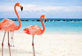 12 curiozități despre păsările flamingo