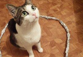 Capcana pisicii. De ce pisicile stau cuminți dacă le pui într-un cerc?