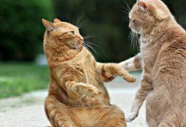 O pisică își poate recunoaște mama de care a fost despărțită în copilărie?