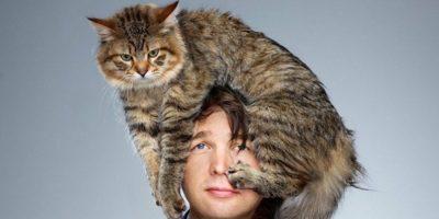 Este adevărat că pisicile stau pe locul dureros al unei persoane?