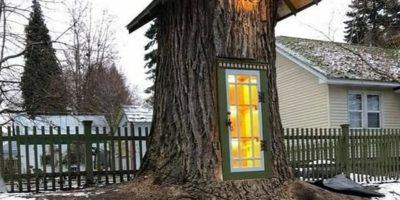 Cum e să locuiești într-un trunchi de copac care are 19 secole?