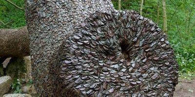 Un copac neobișnuit plin cu monede a fost descoperit în Anglia