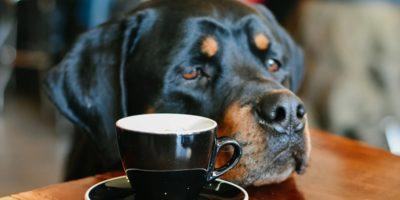 4 rase minunate de câini care trăiesc doar 9 ani