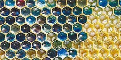 Albinele din Franța au început să facă miere albastră